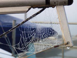 30dec16-cobweb